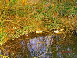 2015 Ouverture de la Pêche de la Truite - La Pollution